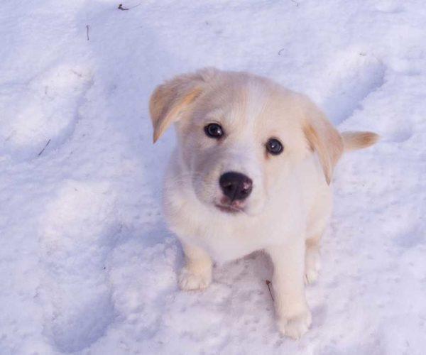 Find et godt hundebur til din hund